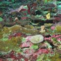 FK200429-054049Z-Leptoseris-Dive365